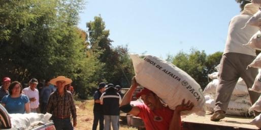 Pequeños agricultores de Marchigue contentos con alfalfa para su ganado