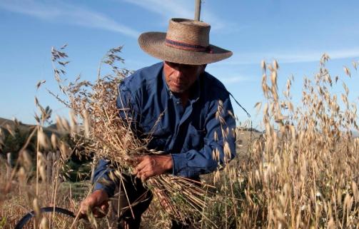 """""""Plan COOPEUMO 2020"""", un plan de acción referente para el futuro de las cooperativas agrícolas nacionales"""