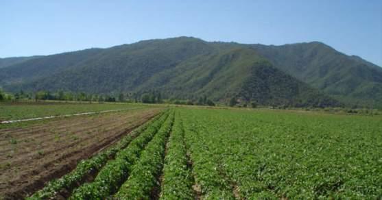 INDAP O'Higgins invita a mejorar la productividad de suelos de pequeños agricultores