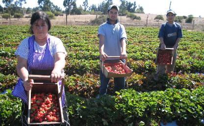 Estudio define modelo de comercio electrónico para la agricultura familiar campesina