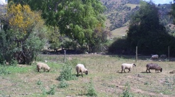 INDAP O'Higgins beneficia con asesoría técnica a pequeños agricultores del secano