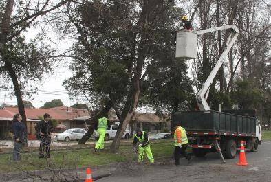 Municipio inicia nuevo servicio de manejo de arbolado urbano