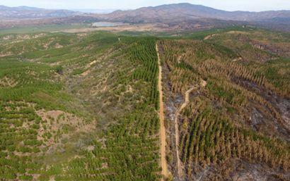 Obras Públicas construyó cortafuegos en 19 sectores de las provincias de Cardenal Caro y Colchagua