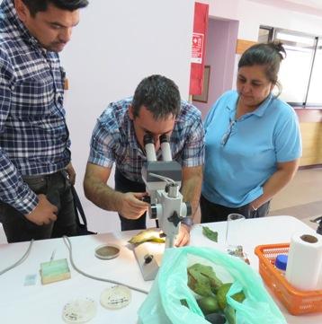 Agricultores asisten a Día de Campo para reconocer enfermedades en hortalizas
