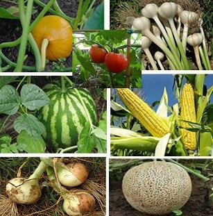 Pequeños agricultores hortícolas se informaron sobre nuevas tecnologías