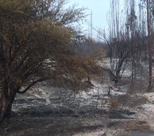 43 pymes afectadas por Incendios Forestales hoy vuelven a trabajar gracias a programas de CORFO y SERCOTEC