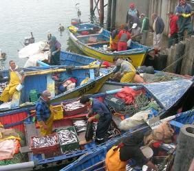 En O'Higgins servicios se coordinaron para fiscalizar cumplimiento de veda de la merluza común durante septiembre