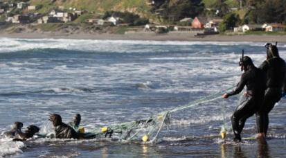 Sernapesca junto a pescadores locales logran liberar a cuatro lobos marinos juveniles atrapados en red de pesca