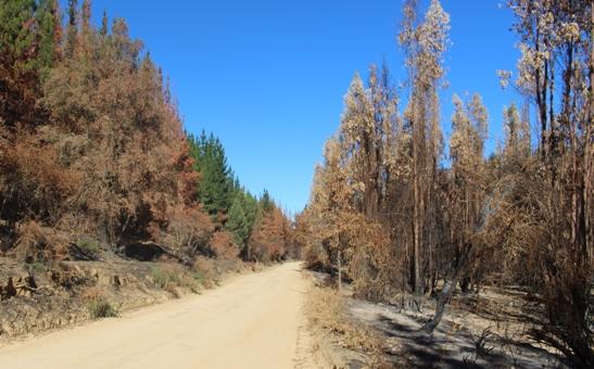 En Pumanque se implementará plan piloto de restauración de zonas  afectadas por los incendios Forestales