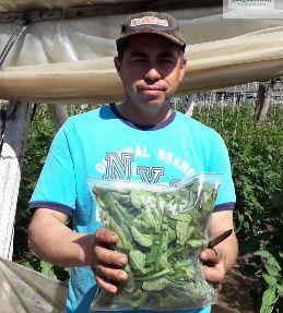 Segundo muestreo de descartes hortofrutícolas para crear oportunidades de negocios en alimentos funcionales
