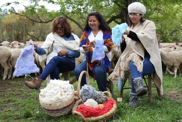 Artesanas de la Región de O'Higgins buscan rescatar la lana merino, una de las fibras más finas y antiguas del mundo