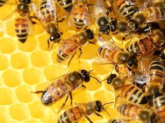Nuevo seguro apícola con subsidio estatal para proteger las colmenas