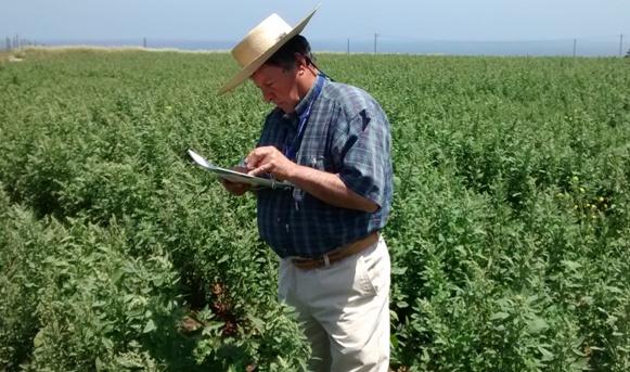 Cooperativa busca mercados para la quínoa que produce en el secano de la Región de O'Higgins