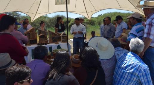 INIA Rayentué: Más de 600 personas asistieron al Día de Campo Hidango 2018