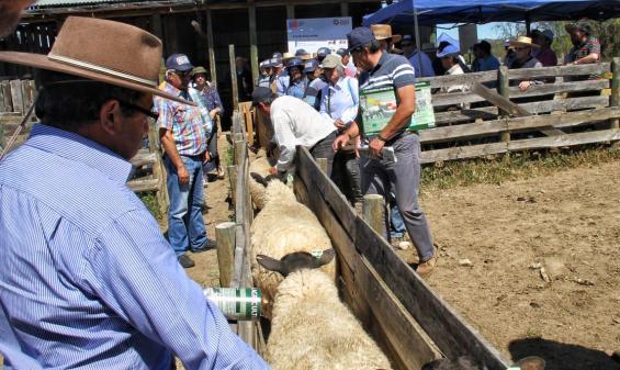 Unos 180 agricultores participaron en Día de Campo Predio Foco Ovino