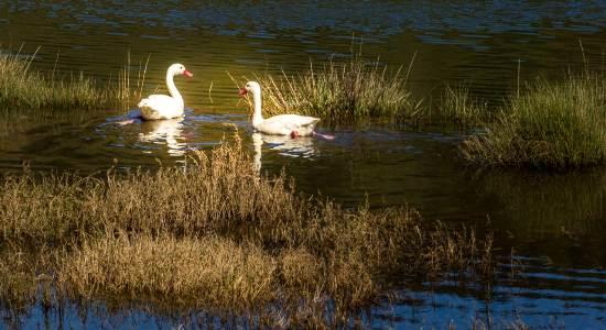 Medio Ambiente celebra día mundial de los Humedales con Concurso fotográfico regional