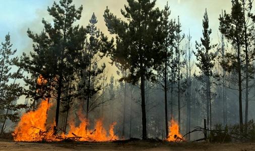 Incendio Forestal El Calvario de Paredones es el más grande de la temporada