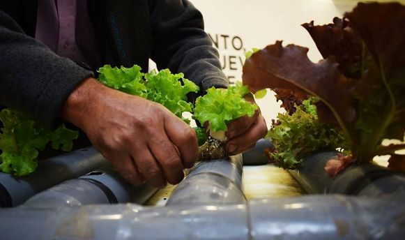 O'Higgins HortiCrece consolida su continuidad con el desafío de transformar la industria hortícola regional