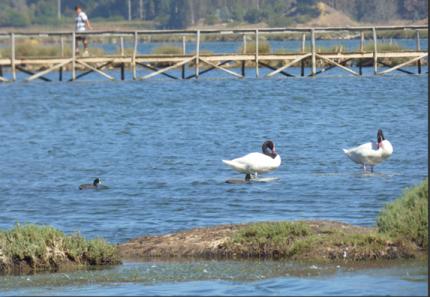 SEREMI del Medio Ambiente celebra el Día Mundial de los Humedales con 2do concurso de fotografía