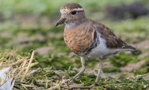 SEREMI del Medio Ambiente invita a jornada de avistamiento de aves en Cáhuil