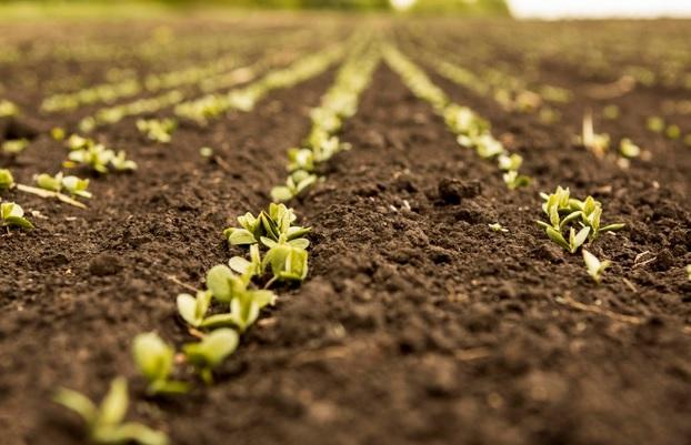 Bioinsumos en la agricultura: La tendencia para la producción sostenible que avanza a pasos agigantados
