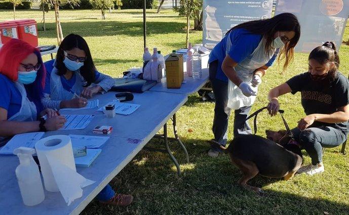 Municipalidad de Rancagua realiza operativo veterinario masivo de mascotas, sin costo