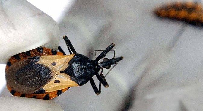 Prevención y tratamiento las claves para enfrentar la Enfermedad de Chagas